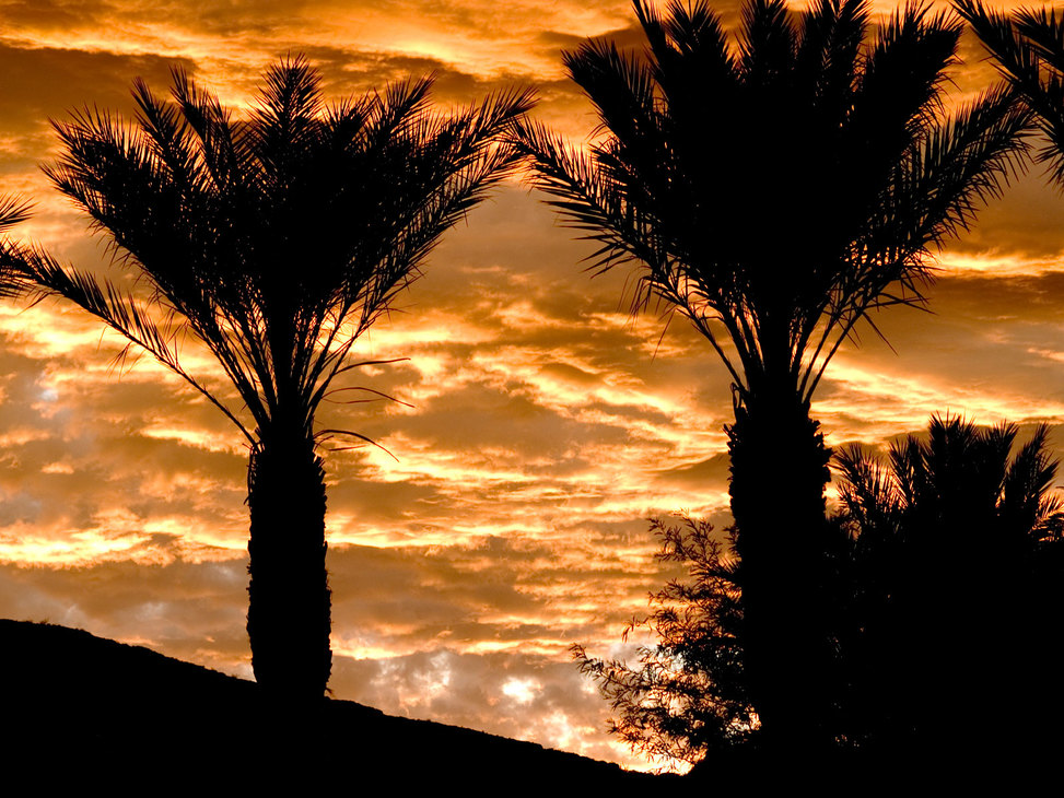 Golden sky palms